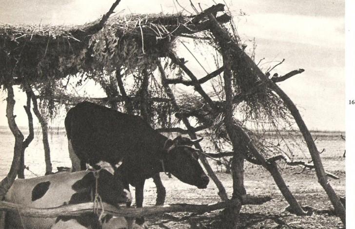Corral Vacas